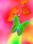 Butterfly computer image