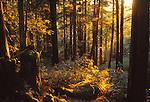 Purisima Redwoods Open Space Preserve, CA