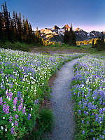 Wildflowers, path and Tatoosh Mountains. Mt Rainier National Park, Washington