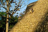 Tikal National Park, Peten, Guatemala