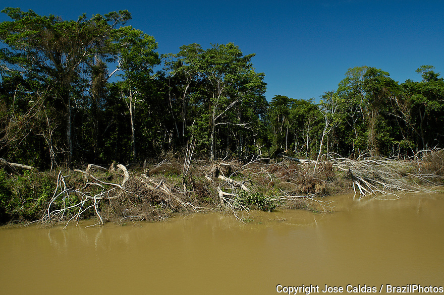 Illegal Amazon deforestation for cattle raising at the margins of Madeira River ( Rio Madeira ), a tributary of the Amazon river - accordingly to Brazilian environmental law, margins of rivers are considered Permanent Preservation Areas or APP - Area de Preservacao Permanente - Amazonas State, Amazon rain forest, Brazil.