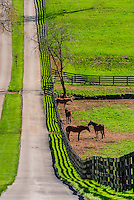 Kentucky-Lexington-Horse Farms