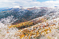 Hoarfrost and autumn color, Roan Highlands
