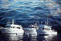 Southern California, Santa Monica Bay, South Bay, SoCal, Motor Boating, Power Yachts, anchored, Water reflection, in camera effect