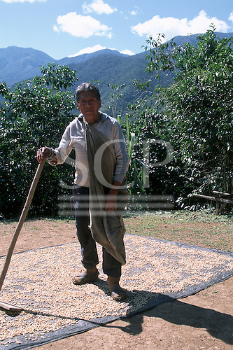 San Juan del Oro, Peru. Fair Trade farmer spreading coffee beans in  the sun to dry.