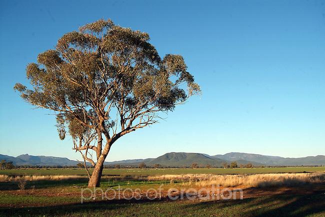 Rural New South Wales ner Gunadah NSW