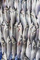 Raw fresh fish, Levrek, also European seabass, on sale in food market in Kadikoy district on Asian side of Istanbul, East Turkey