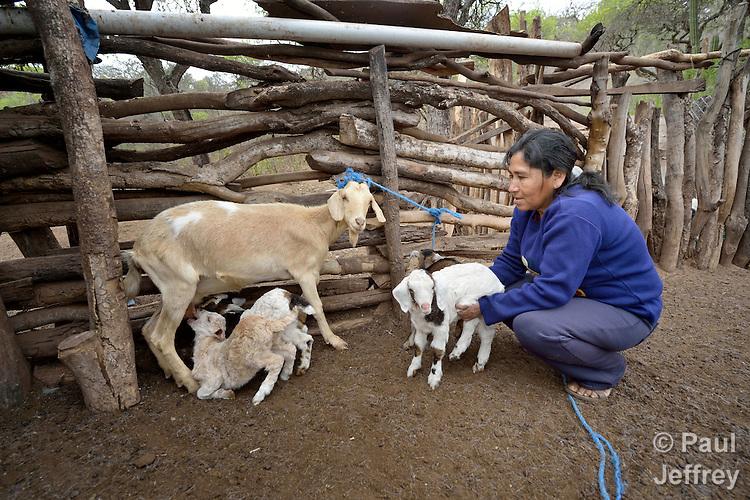 Primitiva Torres Mendoza cares for her goats in the Guarani indigenous village of Kapiguasuti, Bolivia.