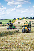 Harvesting whole crop rye for anaerobic digestion - Norfolk, July