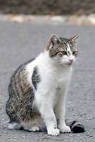 JUL 11 Larry the cat guards 10 Downing Street