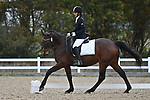 Stapleford Abbotts. United Kingdom. 09 November 2019. Class 7. Unaffiliated Dressage. Brook Farm training centre. Stapleford Abbotts. Essex. United Kingdom. Credit Garry Bowden/Sport in Pictures.~ 09/11/2019.  MANDATORY Credit Garry Bowden/SIP photo agency - NO UNAUTHORISED USE - 07837 394578