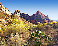 The Watchman and cactus in Zion National Park