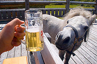 Kaprun, Salzburgerland, Austria, September 2008. A horse comes to check out my beer during lunch on the mountain. Mt Kitzsteinhorn is the highest mountain in the region and makes for a really nice scramble to the summit. Photo by Frits Meyst/Adventure4ever.com