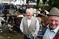 Old men selling donkeys at the Spancill hill horse fair.<br />