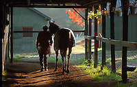 Saratoga Race Course, Saratoga Racetrack, beautiful horse racing, Thoroughbred racing, horse, equine, racehorse, morning mood Scenic, horse racing, mood, beautiful, action, racehorse, horse, equine, racetrack, scene scenic, mood, horse racing, pretty, racehorse, horse, equine, racetrack, track, saratoga