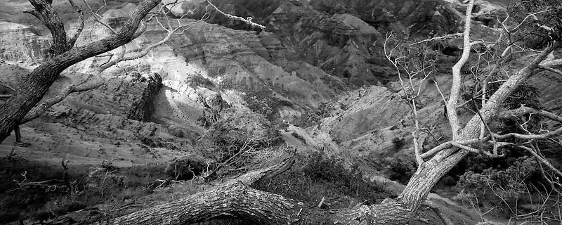 Waimea Canyon with dead tree and light peaking through. Kauai, Hawaii
