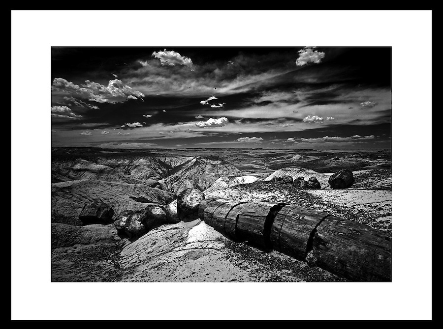 Petrified Forest. © Andrew Shurtleff