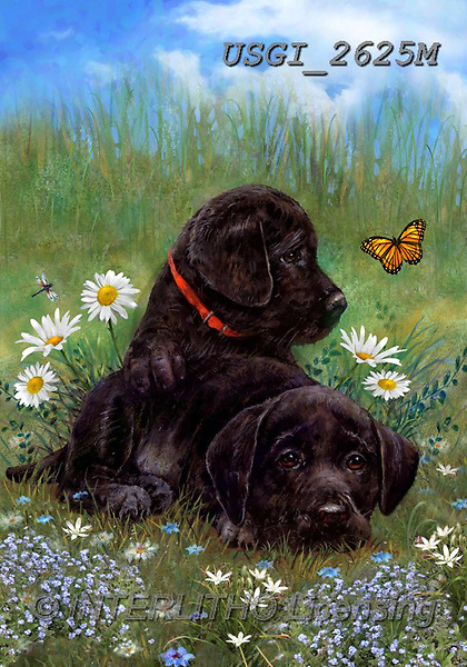GIORDANO, CUTE ANIMALS, LUSTIGE TIERE, ANIMALITOS DIVERTIDOS, paintings+++++,USGI2625M,#ac#, EVERYDAY,labradors,dogs