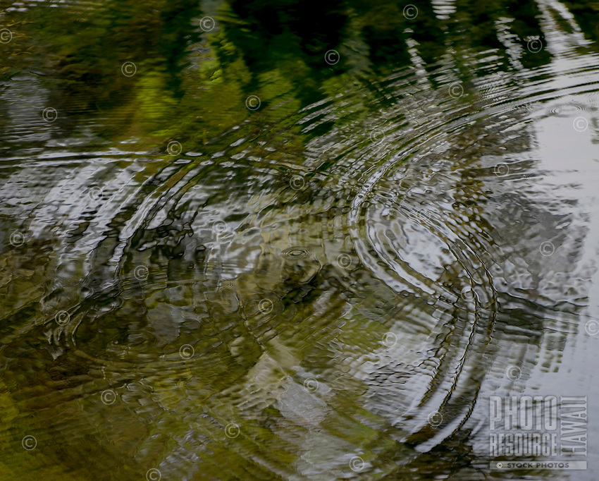 Reflections with rippling circles in the ponds at Carlsmith Beach Park in Hilo, Big Island of Hawai'i.
