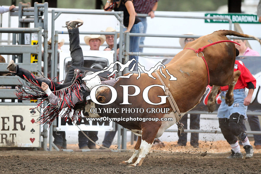 21 Aug 2013:  Shane Proctor riding the bull Two Aces was not able to score in the second round of competition of the Extreme Bulls Wednesday at the Kitsap County Fair and Stampede Rodeo in Bremerton, Washington.