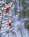Christmas Winter Scene
