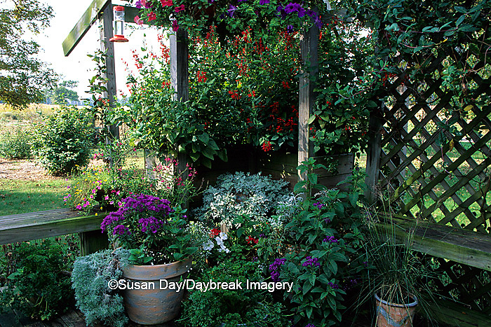 63821-04507 Butterfly/Hummingbird garden in containers on deck    IL