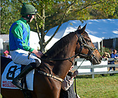 7th Allowance turf flat - Maserati