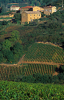 Europe/France/Rhône-Alpes/69/Rhône/Env Jarnioux: Vignoble du Beaujolais