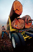 Loading logs on a lumber truck. Oregon.