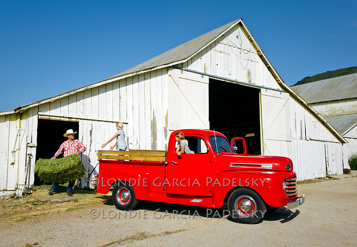 Daughter helps dad load haybales in the 1949 Red Ford Truck, San Luis Obispo, California