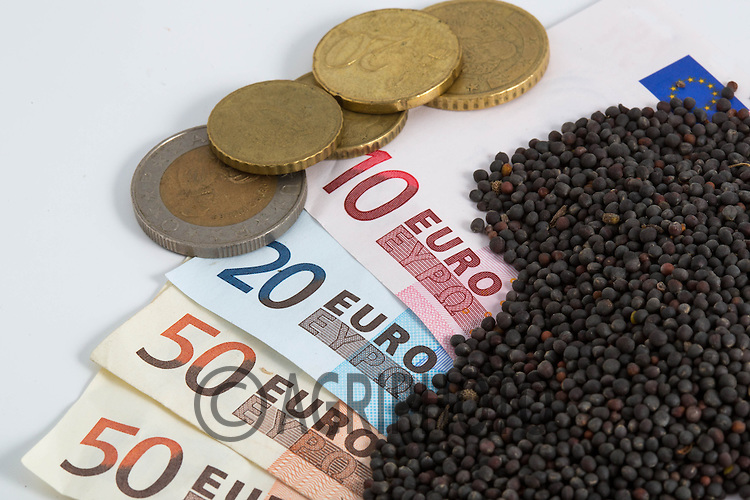 Euro notes with oilseed rape<br /> Picture Tim Scrivener 07850 303986