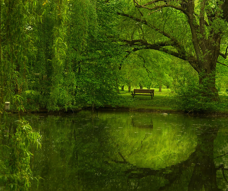 A lake with green foliage and reflections