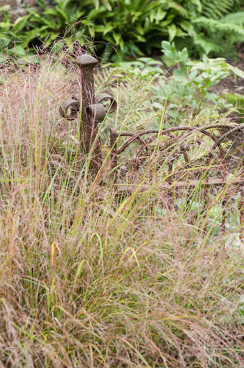 Long grasses and a rusty iron gate, Great Comp, Kent, mid August.