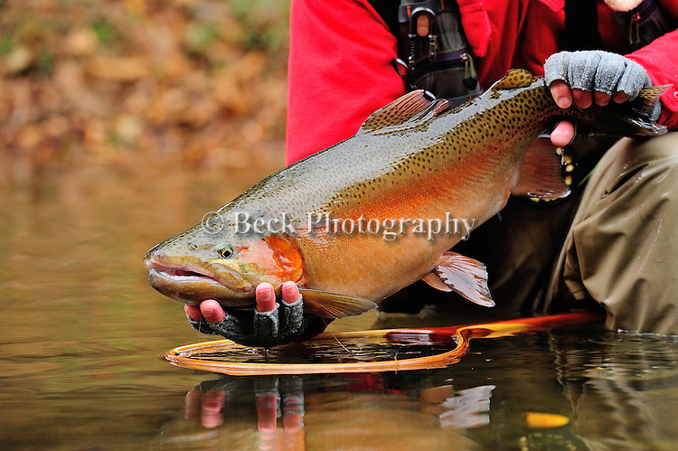 Colorado Rainbow Trout