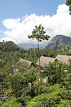 98 Acres resort luxury lodges, Ella, Badulla District, Uva Province, Sri Lanka, Asia view to Ella Gap