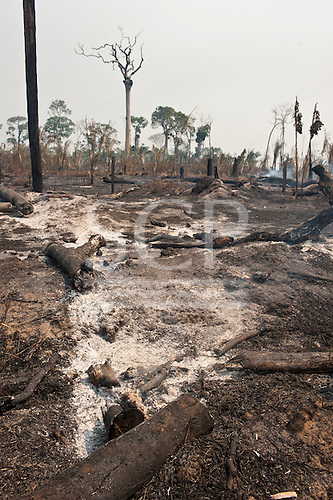 Para State, Brazil. Smouldering trees on recently cleared land.