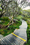 Image Ref: CA295<br /> Location: Charlotte Pass<br /> Date: 27 Jan 2016