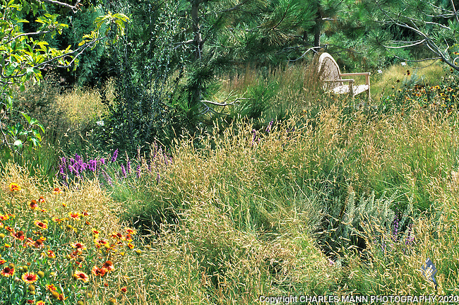 At the Denver Botanic Garden, Dan Johnson created this attractive wildflower meadow using Blue Gramma grass, Bouteloua gracilis and native wildflowers.