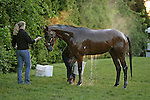 Big Brown (2005 b.h., by Boundary - Mien, by Nureyev) - 2008 Kentucky Derby and Preakness winner