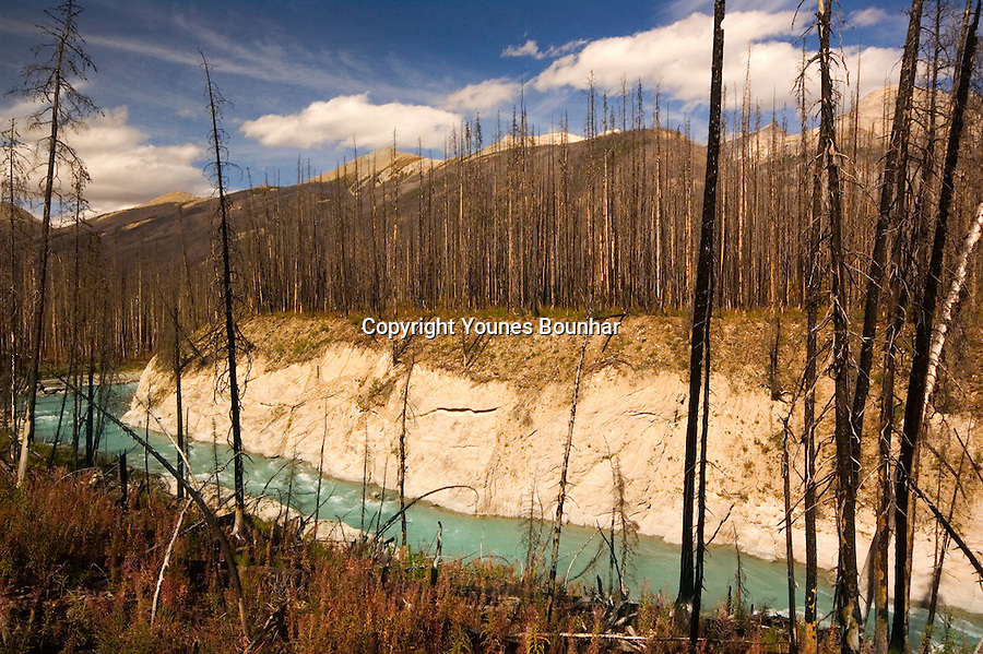 Prescribed burns at the rockwall floe lake trail in Kootenay National park with burned and trees, with flowing glacial river in the foreground