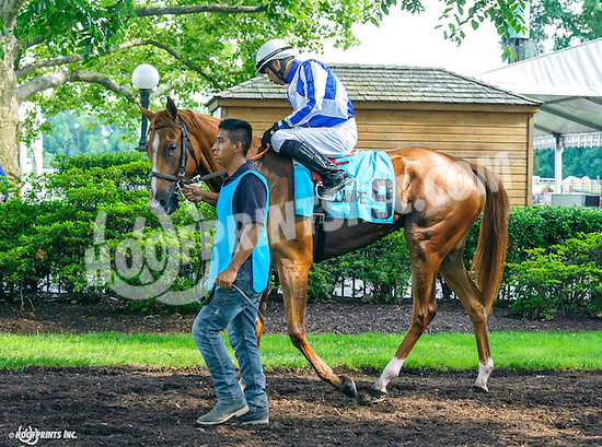 Involuntary before The Christiana Stakes at Delaware Park on 7/6/16