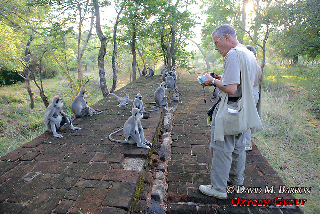 Sandy Cohen Observing Hanuman Langurs