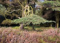 Woodland on Longridge Fell, Lancashire.
