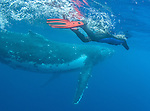 Art Wolfe swims with the whales, Vava'u, Tonga