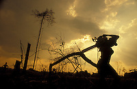 Worker carries his chainsaw at sunset after a hard day of labor, Amazon rainforest deforestation.