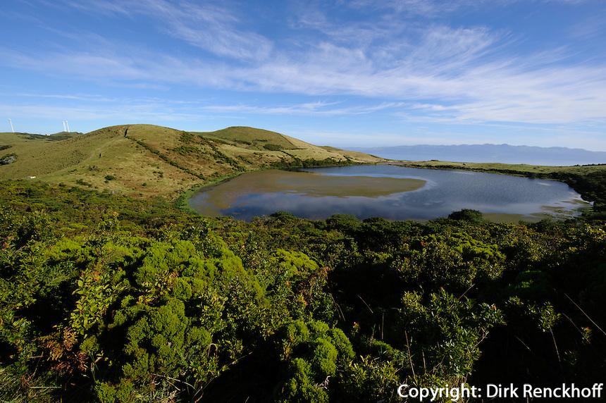 Baumheide (Erica azorica) vor Lagoa do Caiado auf der Insel Pico, Azoren, Portugal