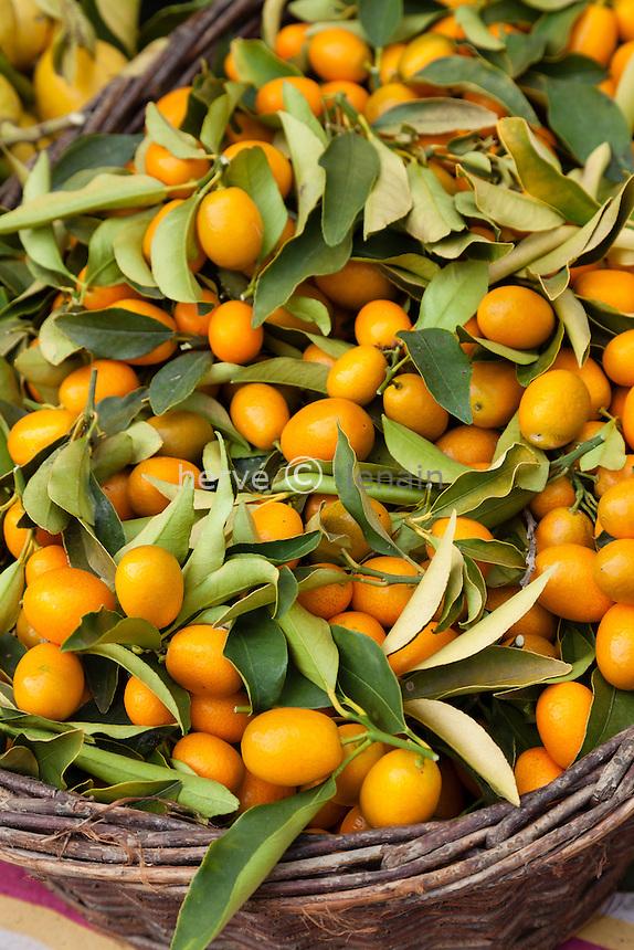 France, Alpes-Maritimes (06), Menton, dans les jardins Bioves lors de la fête du Citron, stand de la pépinière de la Colla de Laurent Gannac, kumquat