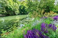 France, Indre-et-Loire (37), Azay-le-Rideau, parc et château d'Azay-le-Rideau au printemps, massif de vivaces au bord de l'Indre avec, Descampsia, Nepeta 'Walker's Low', sauges des bois 'Caradonna' (Salvia nemorosa 'Caradonna'), stippa géant