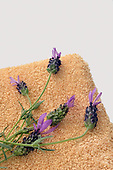 Photo of Lavender Preparation