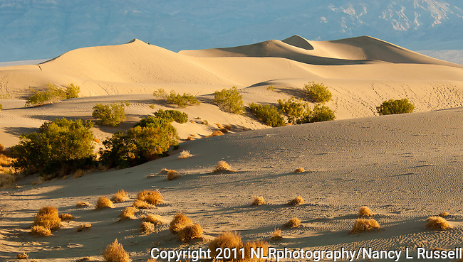Golden morning light on the sand dunes at Mesquite Flat in Death Valley